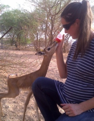 Name this Baby Orphaned Gazelle