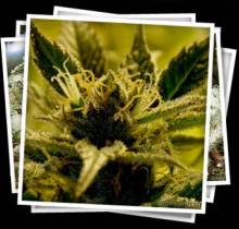 image-medical-marijuana