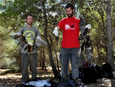 Maltese Hunters Legally Massacre Egypt's Protected Birds (Video)
