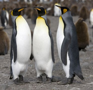 20 Penguins From Texas Live at Dubai Ski Slope