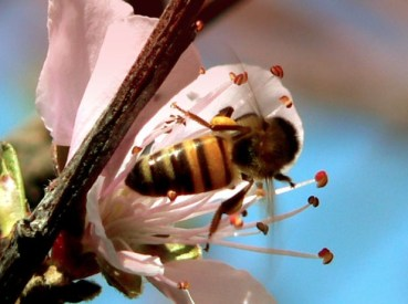 Lebanon's Bees are Freezing to Death