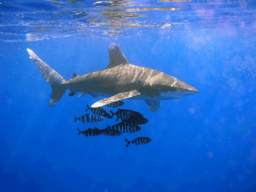 Polish Kite Surfer Fights Off Red Sea Sharks With a Knife