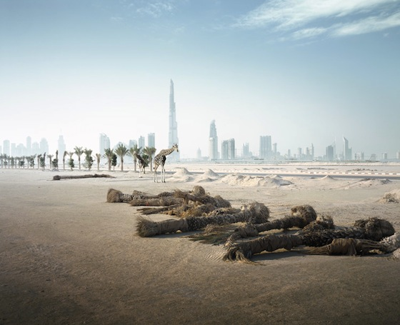 Abandoned: Wild Animals Roam Apocalyptic Dubai (PHOTOS)