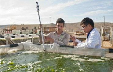 Univerve's Algae to Biofuel Your Car