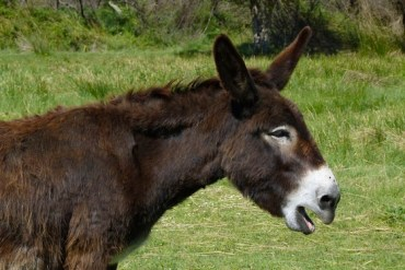 Wireless Donkeys Provide High-Tech Biblical Tours in Israel