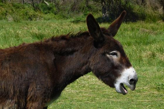 Wireless Donkeys Provide High-Tech Biblical Tours in Israel