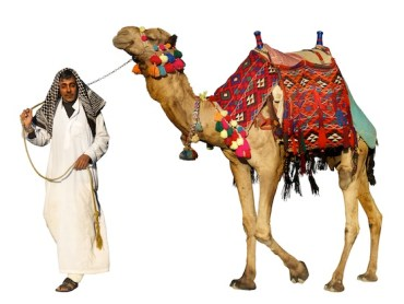 World's First Genetically-Modified Camels in Dubai to Produce Medicine