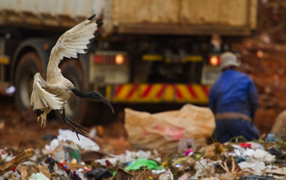 Gaza's First Recycling Plant Opens and Not a Minute Too Soon