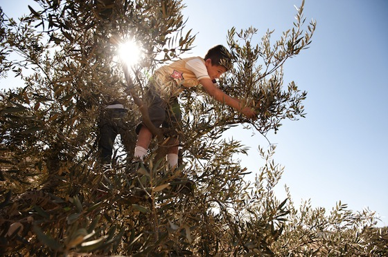 Mapping Palestine's Environmental Civil Society – The Good, the Bad and the Uncooperative