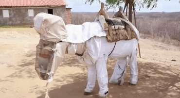 The World's Coolest Beekeeper's Helper is a Donkey in Brazil