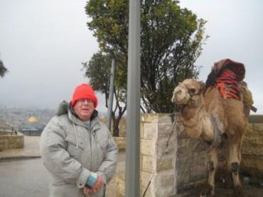 Visiting Jerusalem's Old Abused Mount of Olives Camel