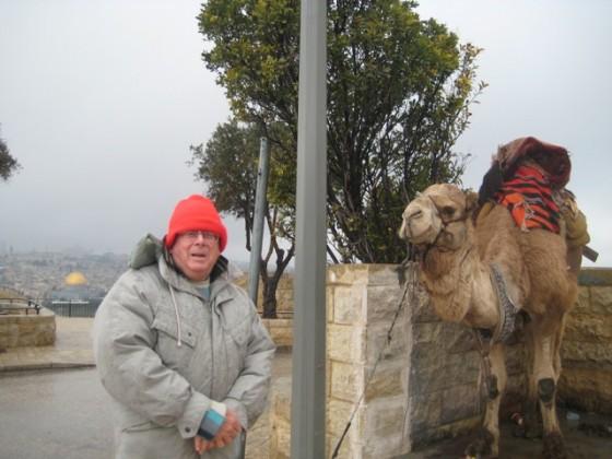 jerusalem camel israel