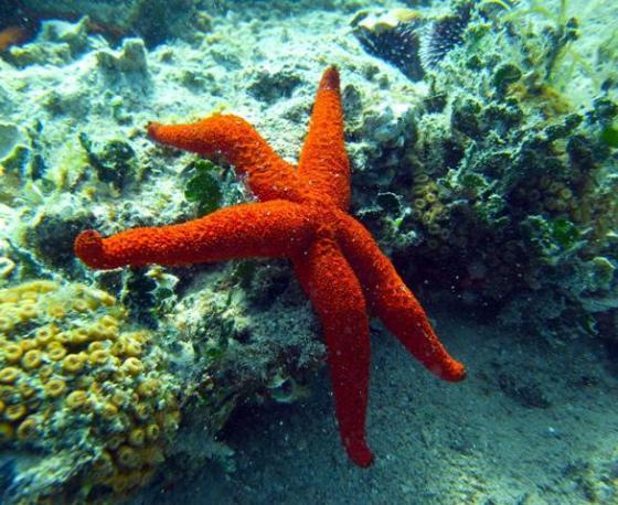 izmir gulf starfish Turkey