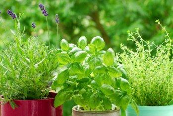 home herb garden