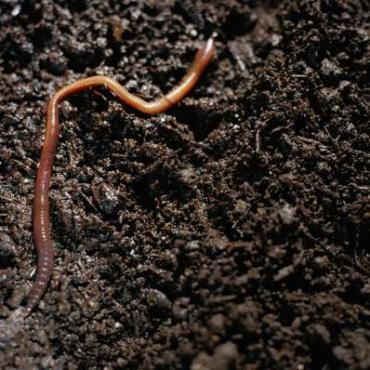 Worm Composting to Rejuvenate Your Plants and Earth