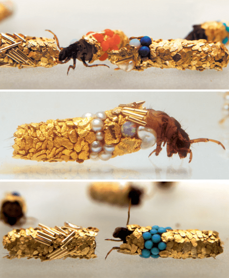 caddisfly larvae build protective cases-using-materials-found-in-their-environment-artist-hubert-duprat-jpeg
