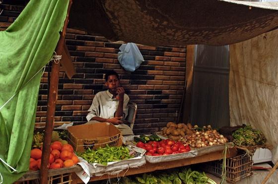 food gmo greenpeace egypt