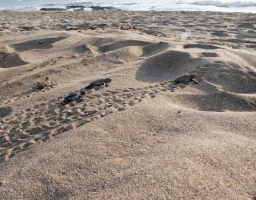 Sign to Save Lebanon's Turtles! Ancient Naqura Coast on Mediterranean Sea At Risk