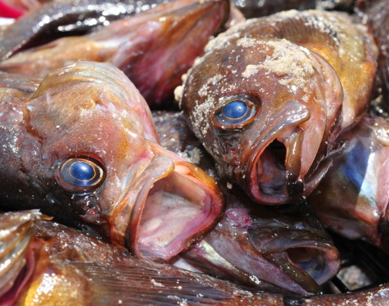 Spring Festival is in Egyptian Air Marked by Petrified, Stinky, Toxic Fish