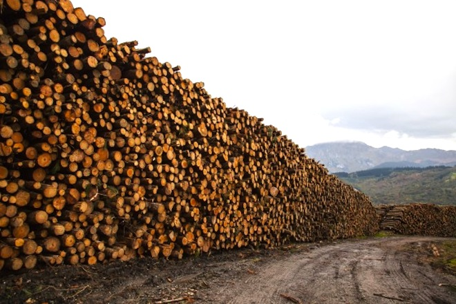 World deforestation: we're losing a forest the size of NYC every 2 days!