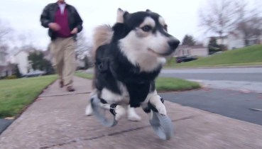 3D-printed paws allow lame dog to run!