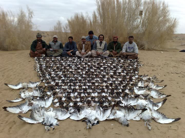 Pakistan shoots down illegal Arab hunting