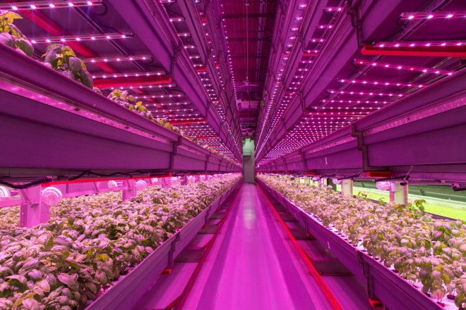 Farmed Here special hydroponic growing project