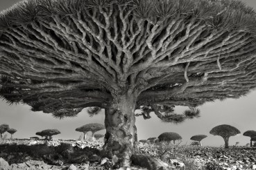 Monumental portraits of the world's oldest trees (PHOTOS)
