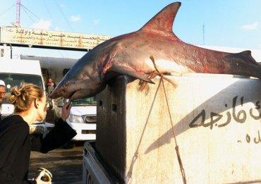 "Kuwait fish market serves ""extinct"" shark"