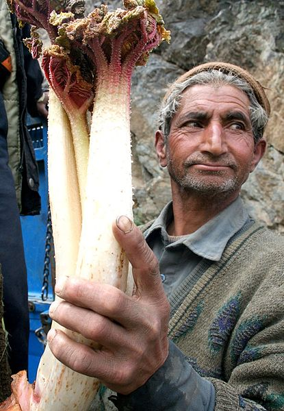 iranian_man_with_rhubarb