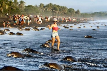 Costa Rican tourists thwart sea turtle nesting, a surreal mirroring of the crisis in the Med