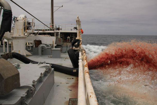 adrar4_609 Fish dumping off W. Sahara