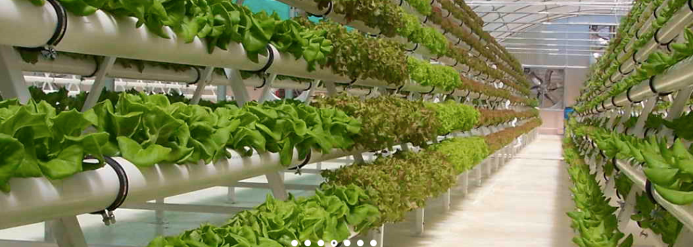 Vermont's tech park and the future of your food