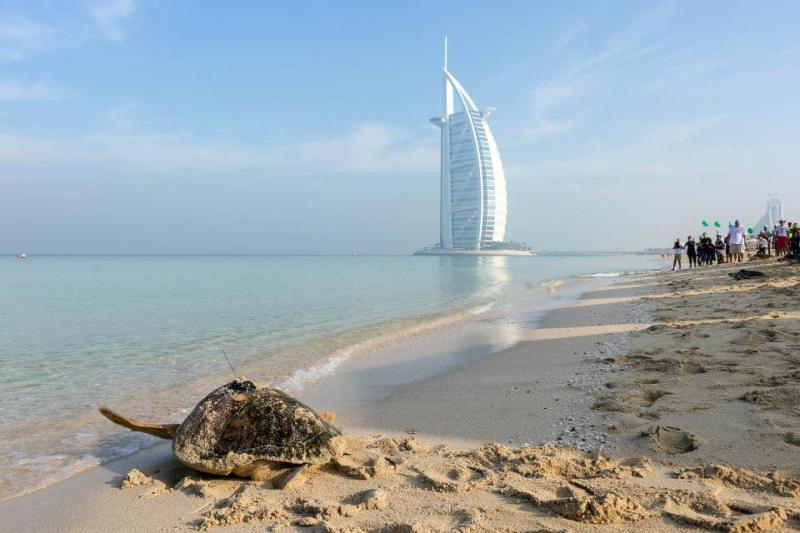 The Burj Al Arab and the Qasr Al Sarab Desert Resort offer luxury around the eco