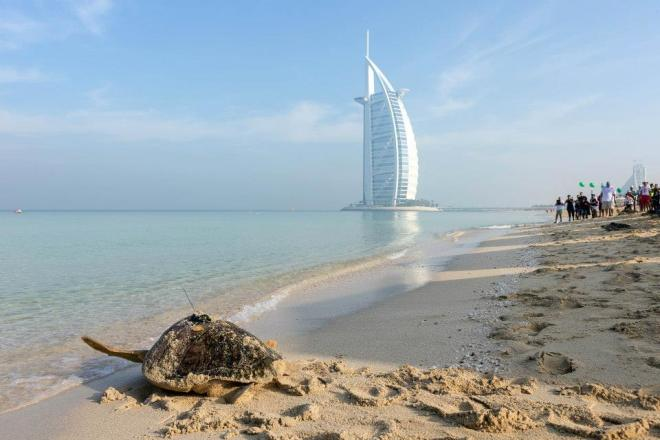 burj al arab turtle project