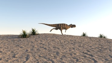 Mass extinction on its way thanks to humans, new study shows