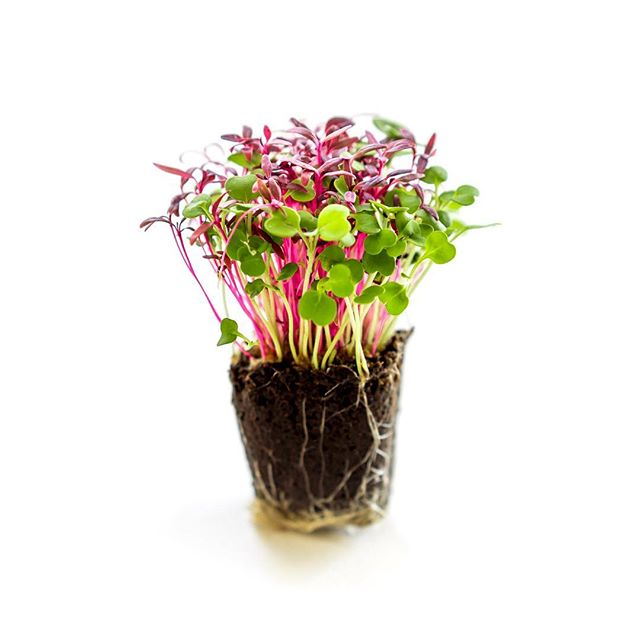 farm-one-herbs