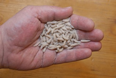 Insect farms to meet feed demand for animals, and us?
