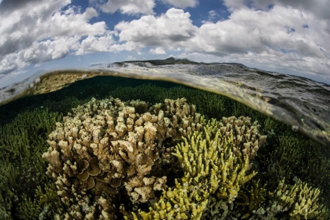 healthy ocean coral reef