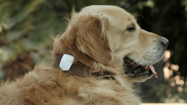 Oggii dog collar device lets you know if pet is happy and healthy