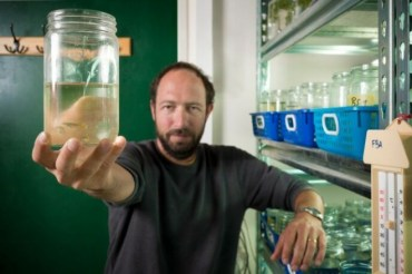 Israel fish research to help aquaponics and fish farming?