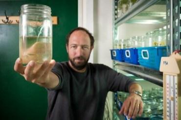 Israel fish research to help aquaponics and fish farming?
