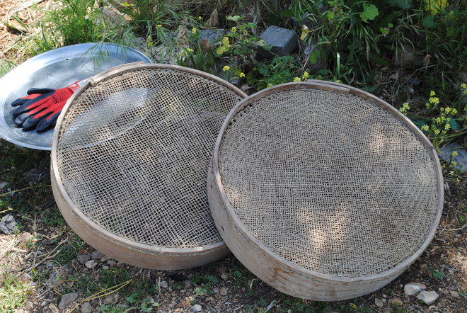 traditional field sieves freekeh harvest