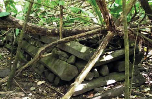 Withered trees on a structure made stacked basalt columns, Pahnkedira World Heritage Centre International Scientific Committee on Archaeological Heritage Management (ICAHM) Report - The Mystery of Nan Madol – Greetings from the Past