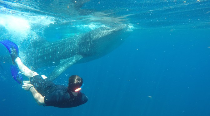 Dancing with Whale-Shark and Manta !