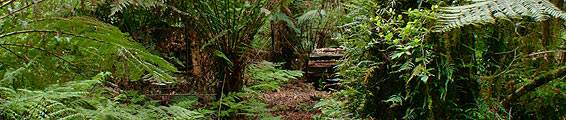 Barrington Tops image