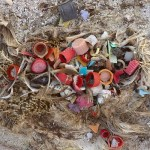American-Photographer-Documents-the-Effects-of-Ocean-Pollution-on-Birds