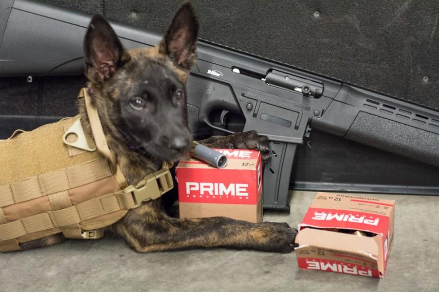 prime_ammo_dutch_shepherd2