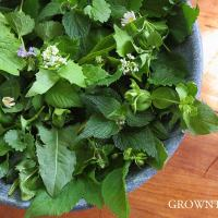 Seasonal salad - weeds