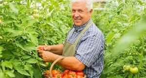 farmer-paradajiz